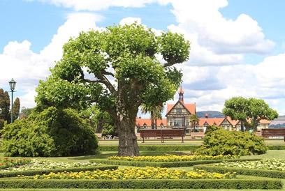 Sorgsame-Bepflanzung-unter-Baum