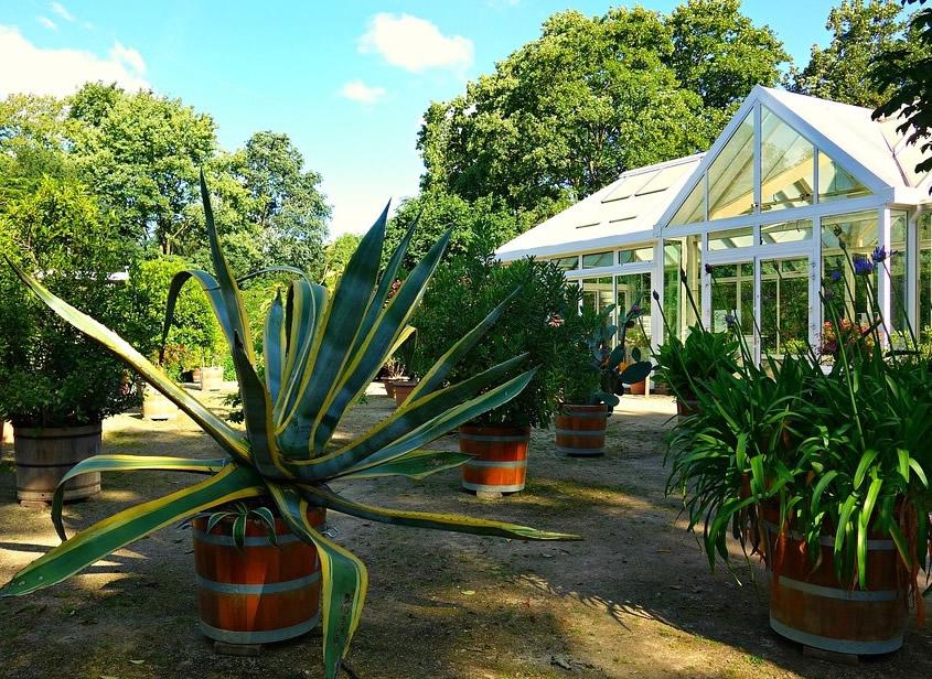 exotische-pflanzen-fuer-orangerie