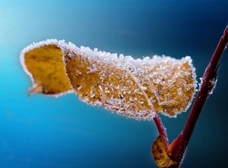 blatt-frost