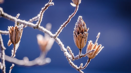 pflanzen-winterhart