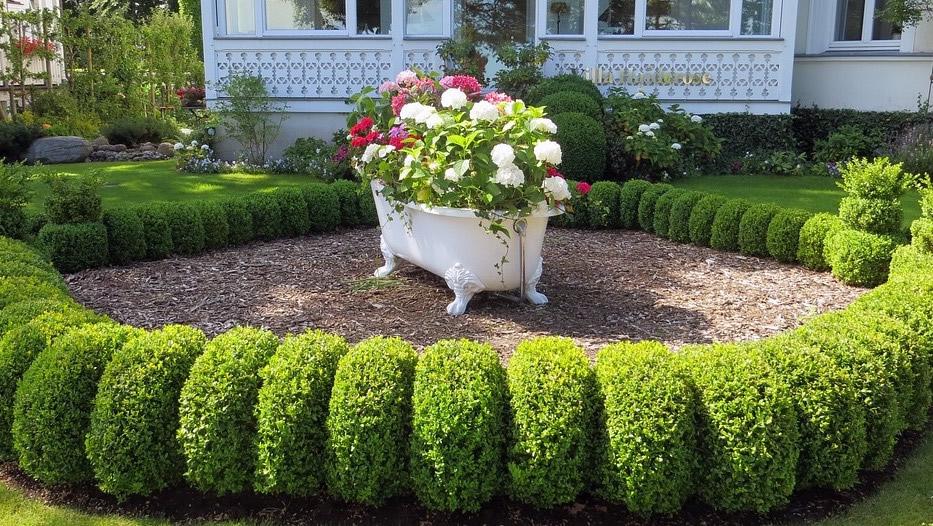 Heckenpflanzen Ratgeber Arten Pflege Auswahl Tipps