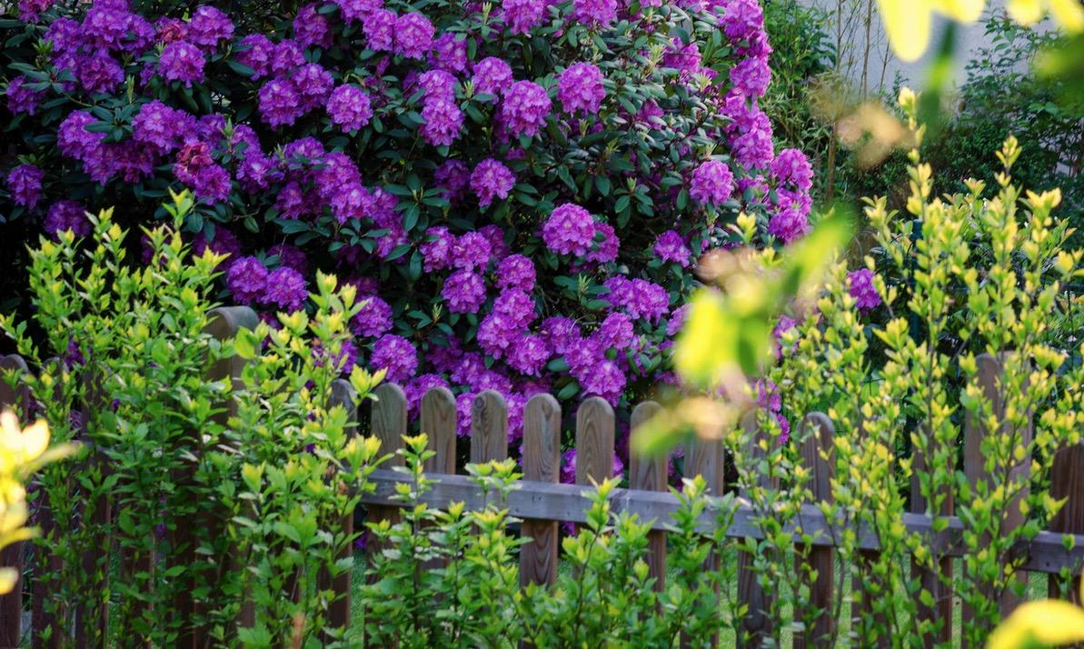 Ideen und Tipps für Sichtschutz im Garten