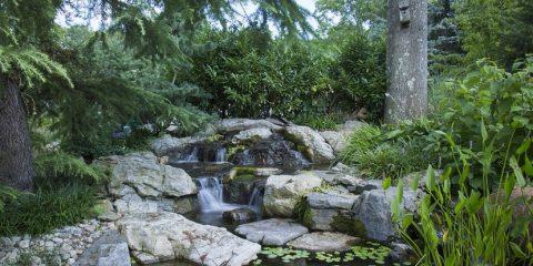 Wassergarten Ideen Und Tipps Zum Anlegen