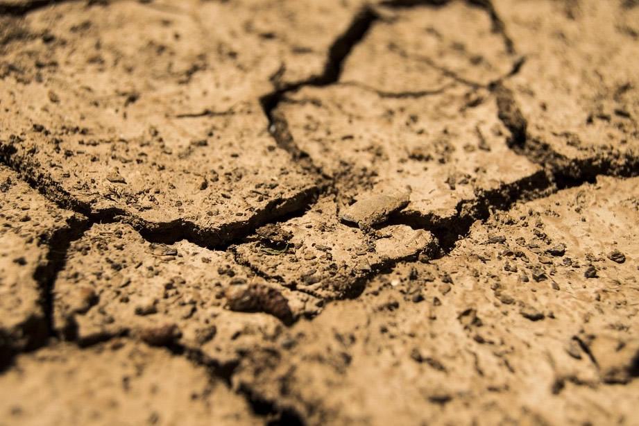 Pflanzen für sandigen Boden - Auswahl und Bodenverbesserung