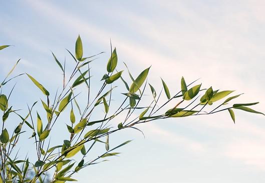 Bambus Pflanzen Im Garten Tipps Auswahl Pflege