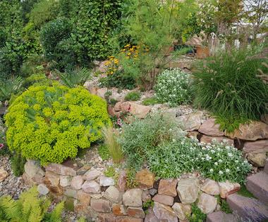 Ganz und zu Extrem Schattengarten anlegen - Pflanzen, Tipps, Ideen &ZJ_88