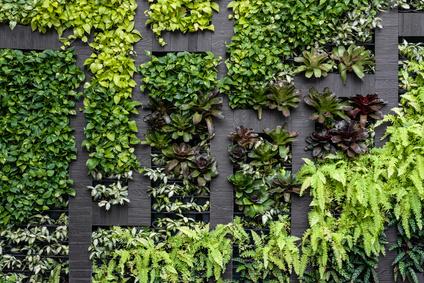 Vertikaler Garten Ideen Aufbau Tipps Pflanzenauswahl