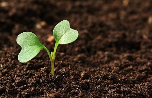 Gartenboden Arten Und Eigenschaften