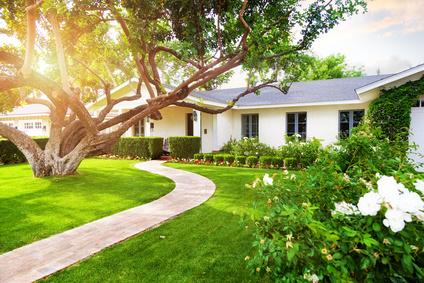 Hausbaum Der Richtige Baum Für Kleinen Und Großen Garten