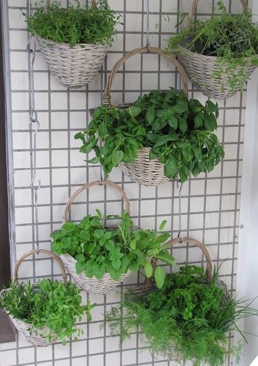Berühmt Vertikaler Garten - Ideen, Aufbau, Tipps, Pflanzenauswahl AL27