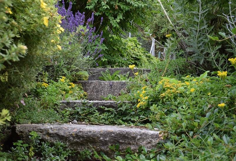 Berühmt Verwilderter Garten - Herrichten & Neu gestalten OS18