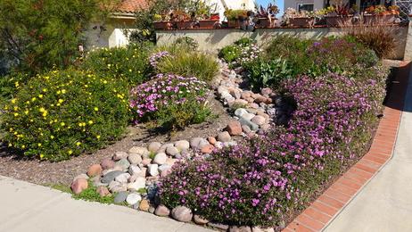 Pflanzen Die Wenig Wasser Brauchen Auswahl Fur Den Garten