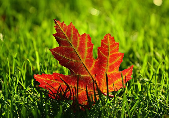 Herbstgarten Gestalten Ideen Zum Dekorieren Und Basteln
